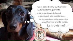 Benny sul Carrello